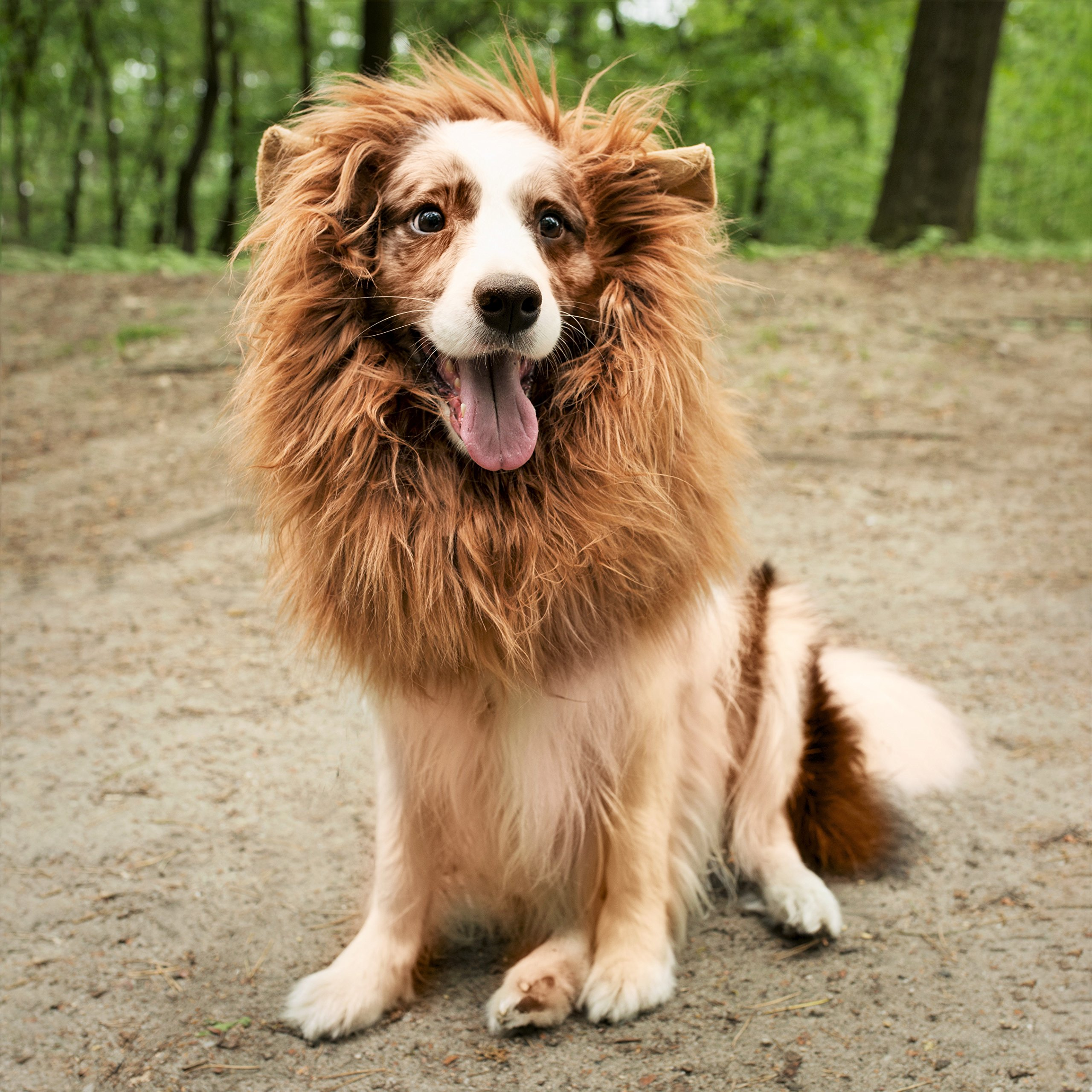 Lion Mane for Dog with Frisbee - Premium Quality, Realistic, Hilarious & Eye Catching Dog Lion Mane - Dog Costume with Ears - Comfortable Lion Wig for Medium and Large Dogs - Perfect Dog Gift by Joy4Pets (Image #9)