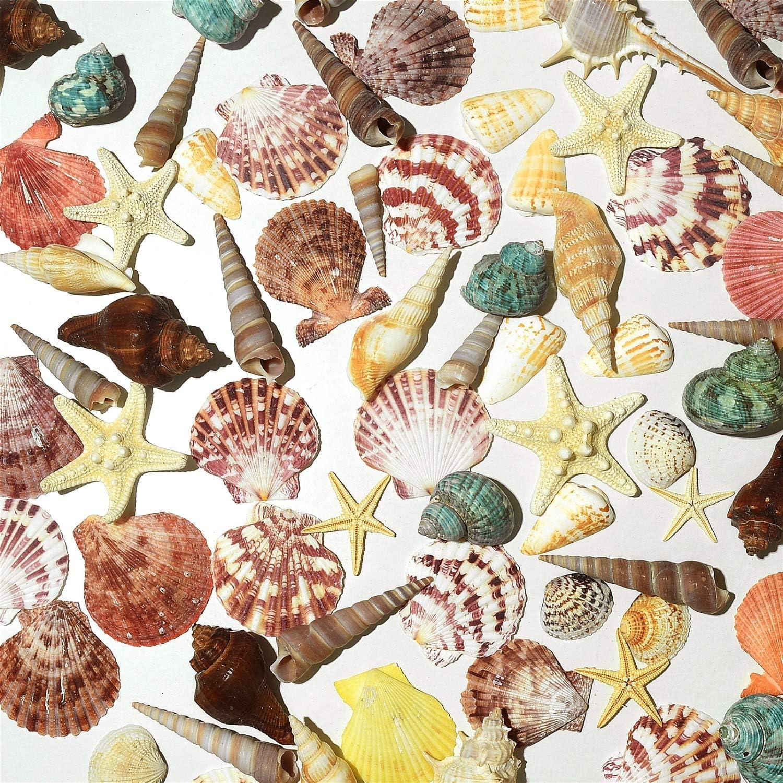 Pomeat Sea Shells, Mixed Beach Seashells, 70PCS Various Sizes Natural Seashells Starfish for Beach Theme, DIY Crafts, Party Wedding Home Fish Tank Decor