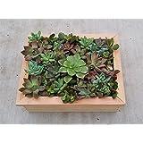 "8"" x 10"" Succulent Framed Planter Box Living Wall Vertical Succulent Planter Box"