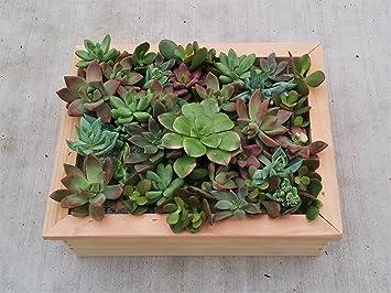 Charmant 8u0026quot; X 10u0026quot; Succulent Framed Planter Box Living Wall Vertical  Succulent ...
