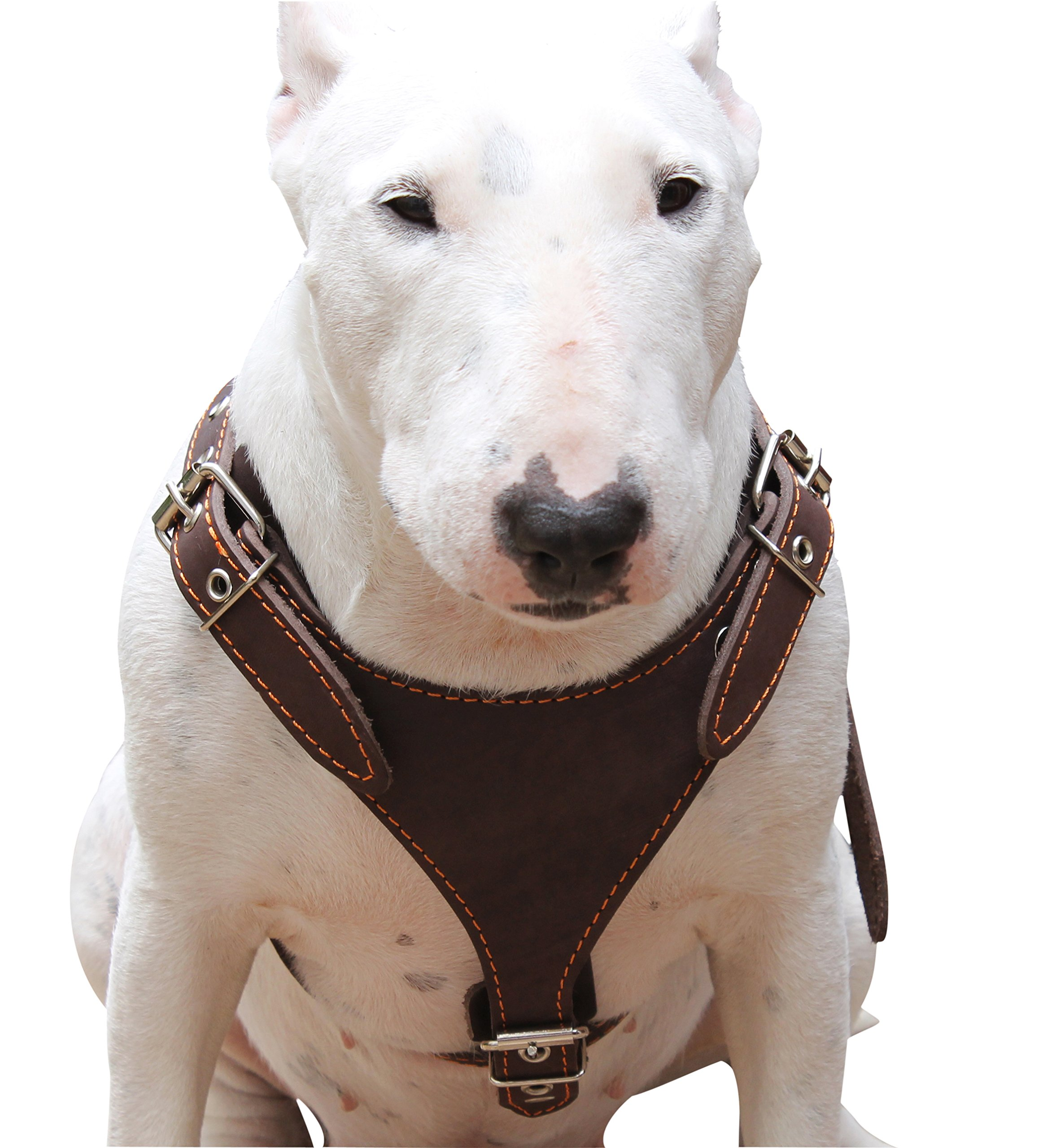 Brown Genuine Leather Dog Harness, Medium. 25''-30'' Chest, 1'' Wide Adjustable Straps