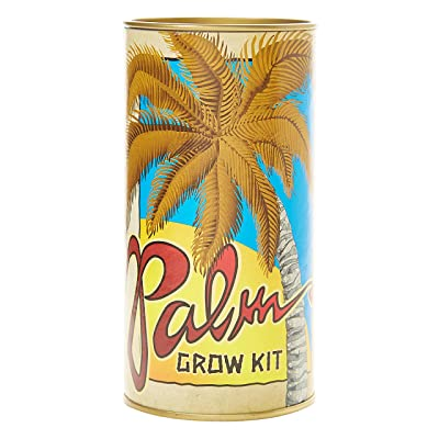 The Jonsteen Company California Fan Palm | Seed Grow Kit : Garden & Outdoor