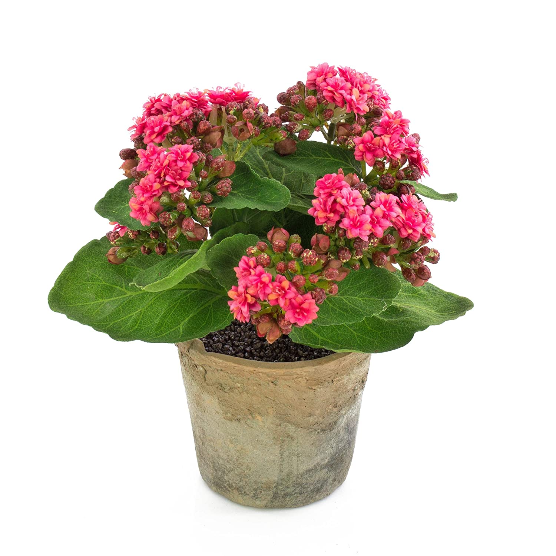 artplants Set 2 x kü nstliche Kalanchoe FAJRA mit Blü ten, rosa, 22 cm - flammendes Kä thchen/Madagaskarglö ckchen