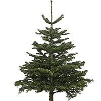 Echter Weihnachtsbaum Nordmanntanne