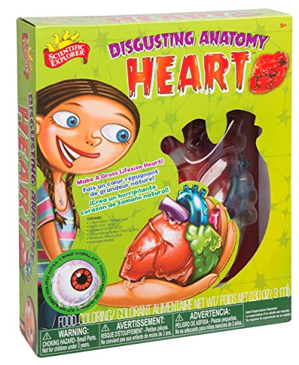 Amazon.com: Scientific Explorer Disgusting Anatomy Heart: Toys & Games