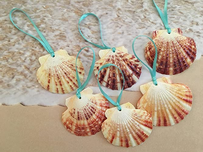 tropical seashell beach christmas ornaments with turquoise ribbon set of 6 - Beach Christmas Ornaments