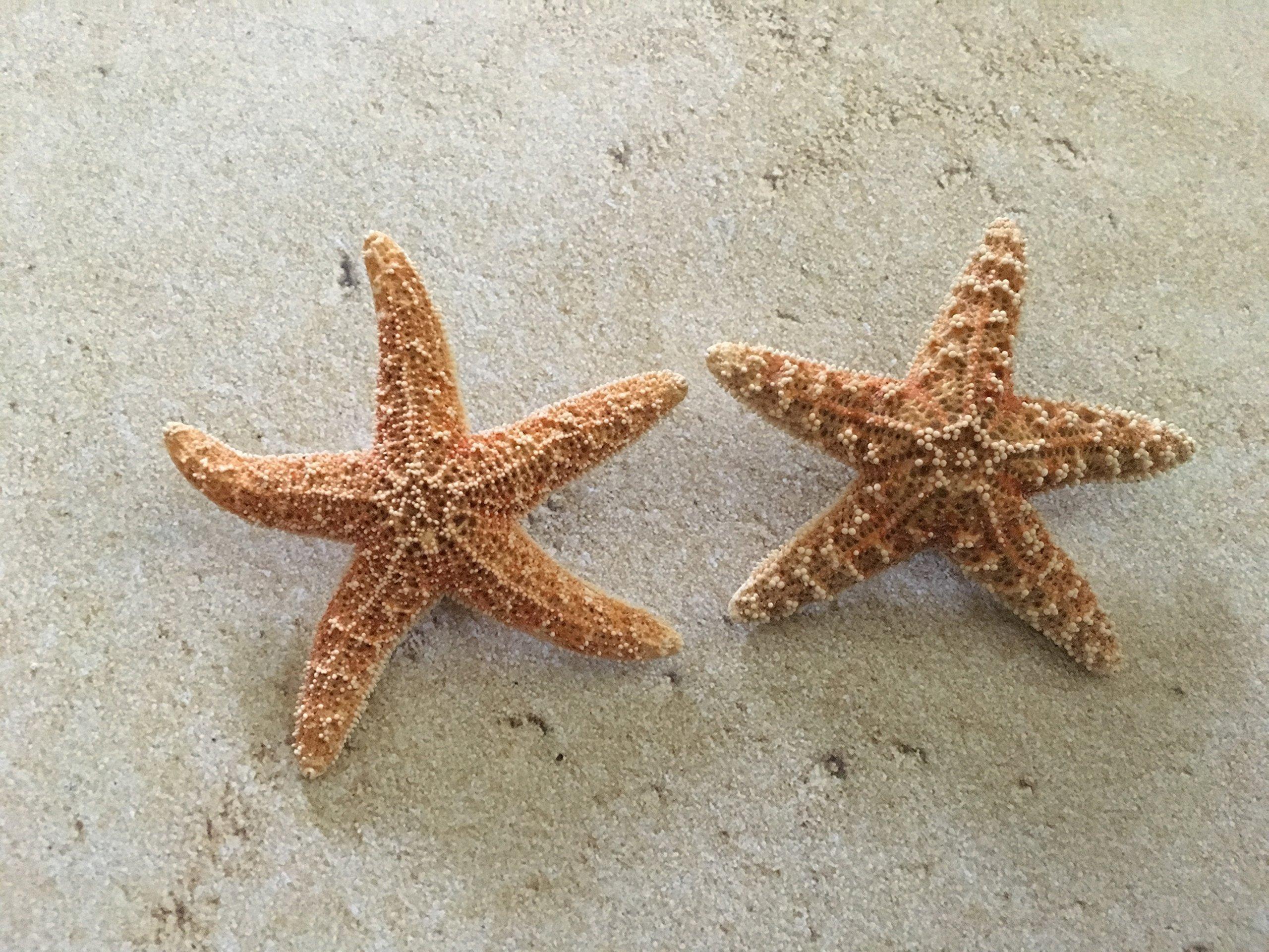 Men's Sugar Starfish Beach Wedding Boutonnieres, 2