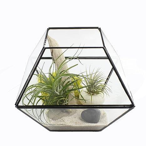 Amazon Com Nw Wholesaler Extra Large Water Tight Glass Terrarium