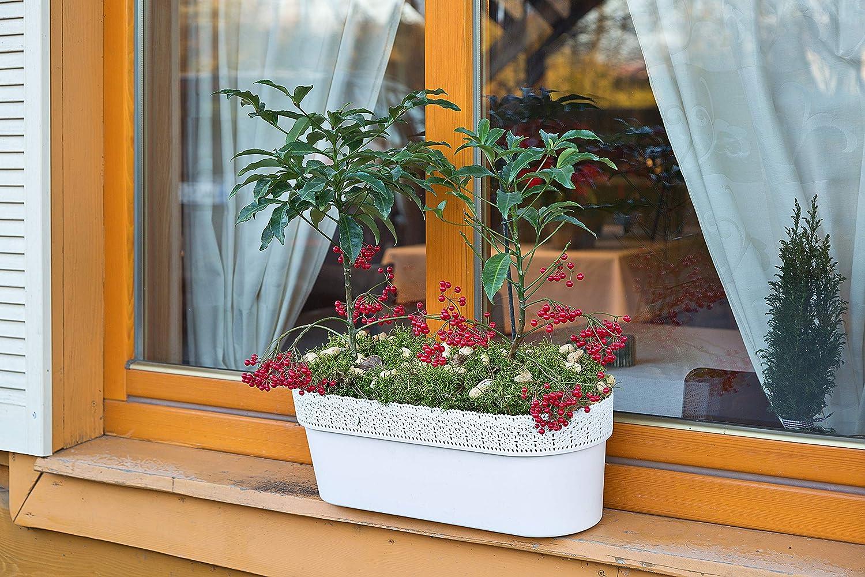 2 x spessore interni Esterni Serra giardino fiori erba piante Pot Holder Bianco