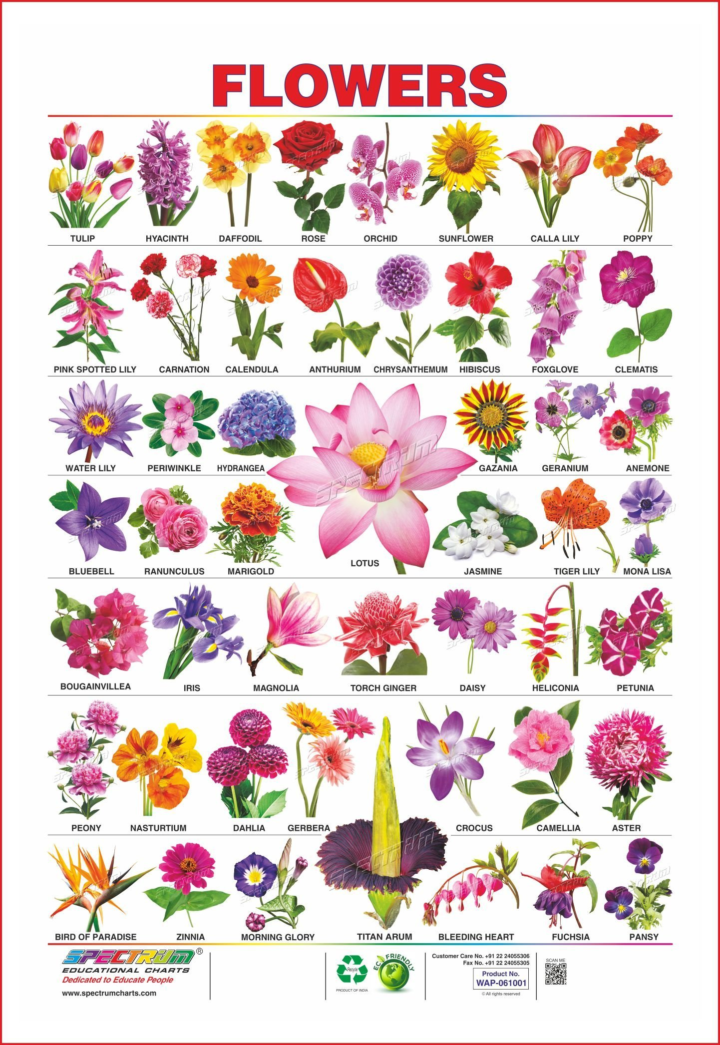 Buy set of 5 educational charts wild animals birds assorted buy set of 5 educational charts wild animals birds assorted fruits 1 vegetables 1 flowers 1 book online at low prices in india set of 5 izmirmasajfo