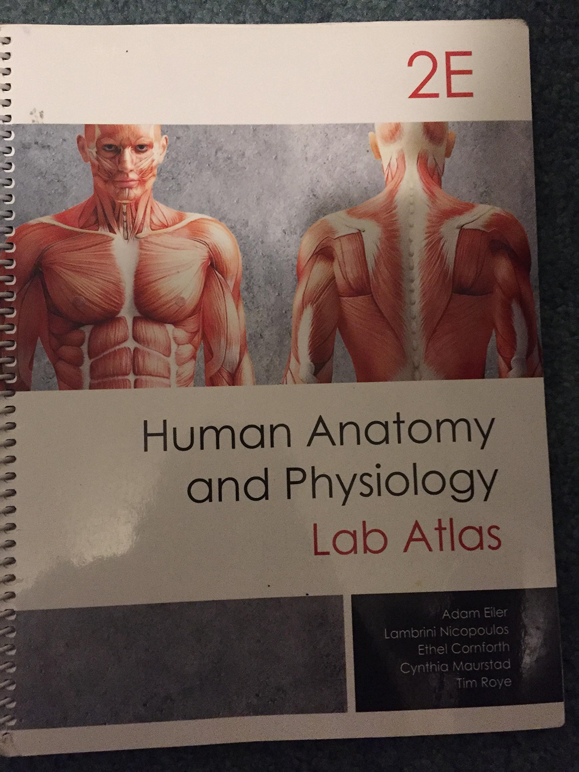 Atlas Of Anatomy For Allied Health Ward 9781599844282 Amazon
