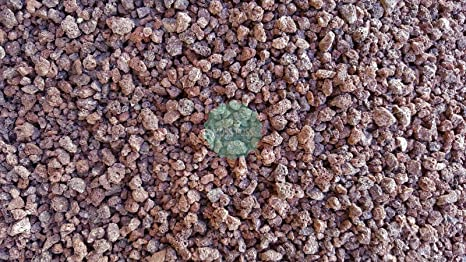 100 Small Red Lava Rocks for Arts /& Crafts Projects Terrariums Jewelry