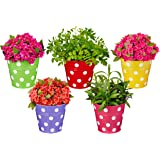 Amazon Brand - Solimo Corrosion Resistant Hanging Planter - Set of 5 (Round - Red, Green, Yellow, Pink, Purple)