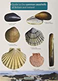Guide to the Common Seashells of Britain and Ireland (Chart)