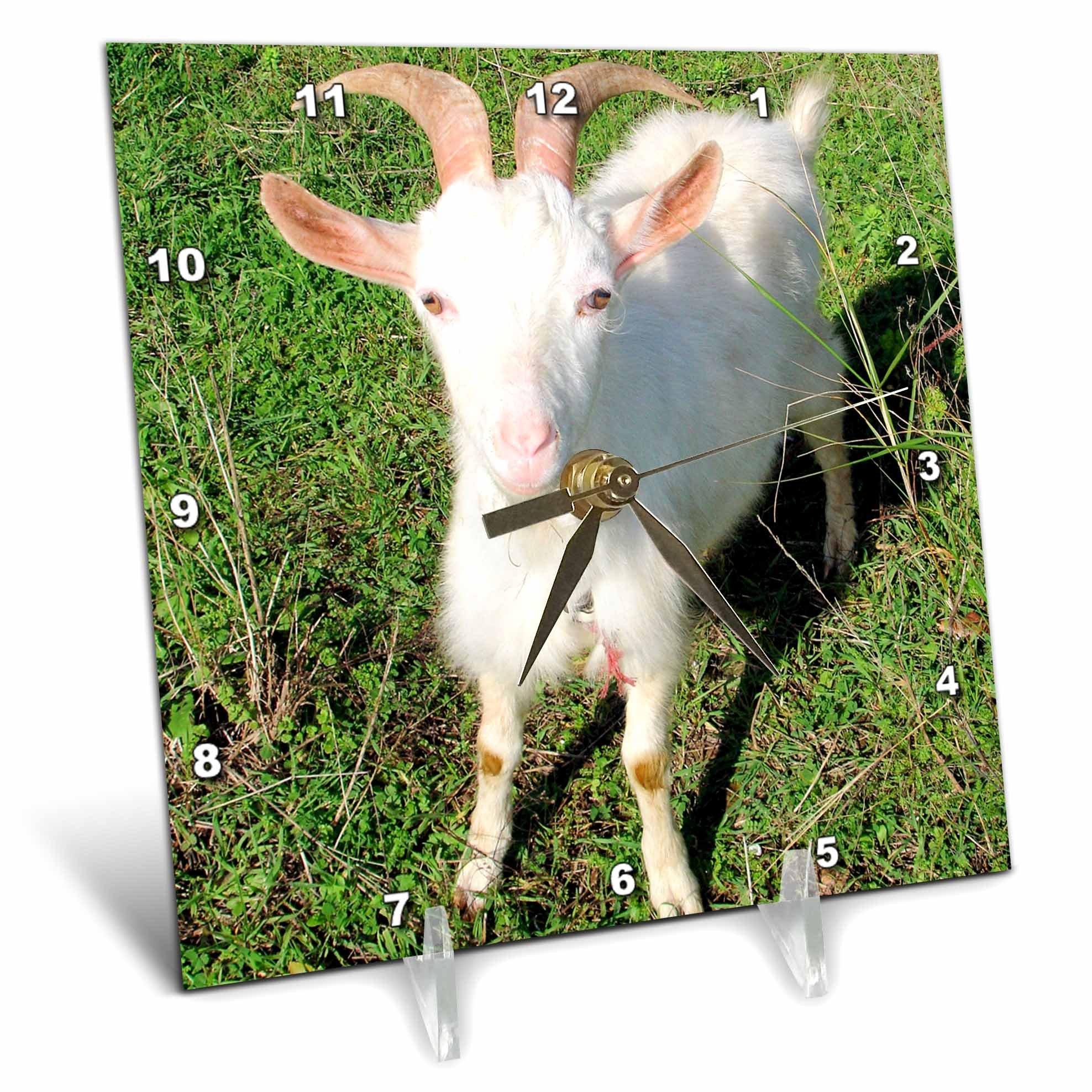 3dRose dc_21325_1 Farm Animals Goat Desk Clock, 6 by 6-Inch by 3dRose