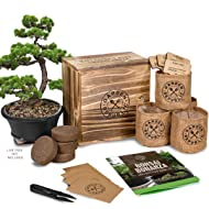 Bonsai Tree Seed Starter Kit - Mini Bonsai Plant Growing Kit, 4 Types of Seeds, Potting Soil, Pots, Pruning Shears Scissor Tool, Plant Markers, Wood Gift Box, eBook, Indoor Garden Gardening Gifts Idea