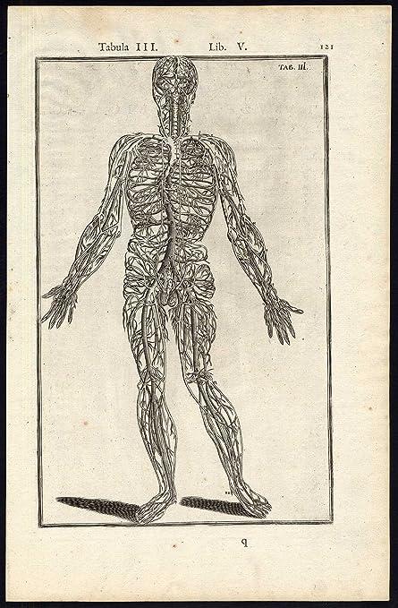 Anatómica rara ThePrintsCollector cruzerlite-intestinos-Man-hígado ...