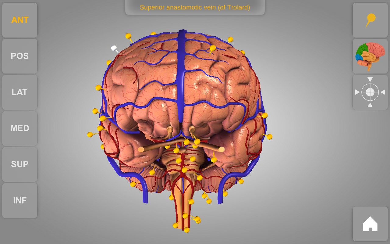 Amazon.com: Brain - 3D Atlas of Anatomy: Appstore for Android