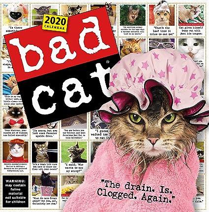 Calendario de pared de gato malo 2020 [12 x 12 pulgadas]: Amazon ...