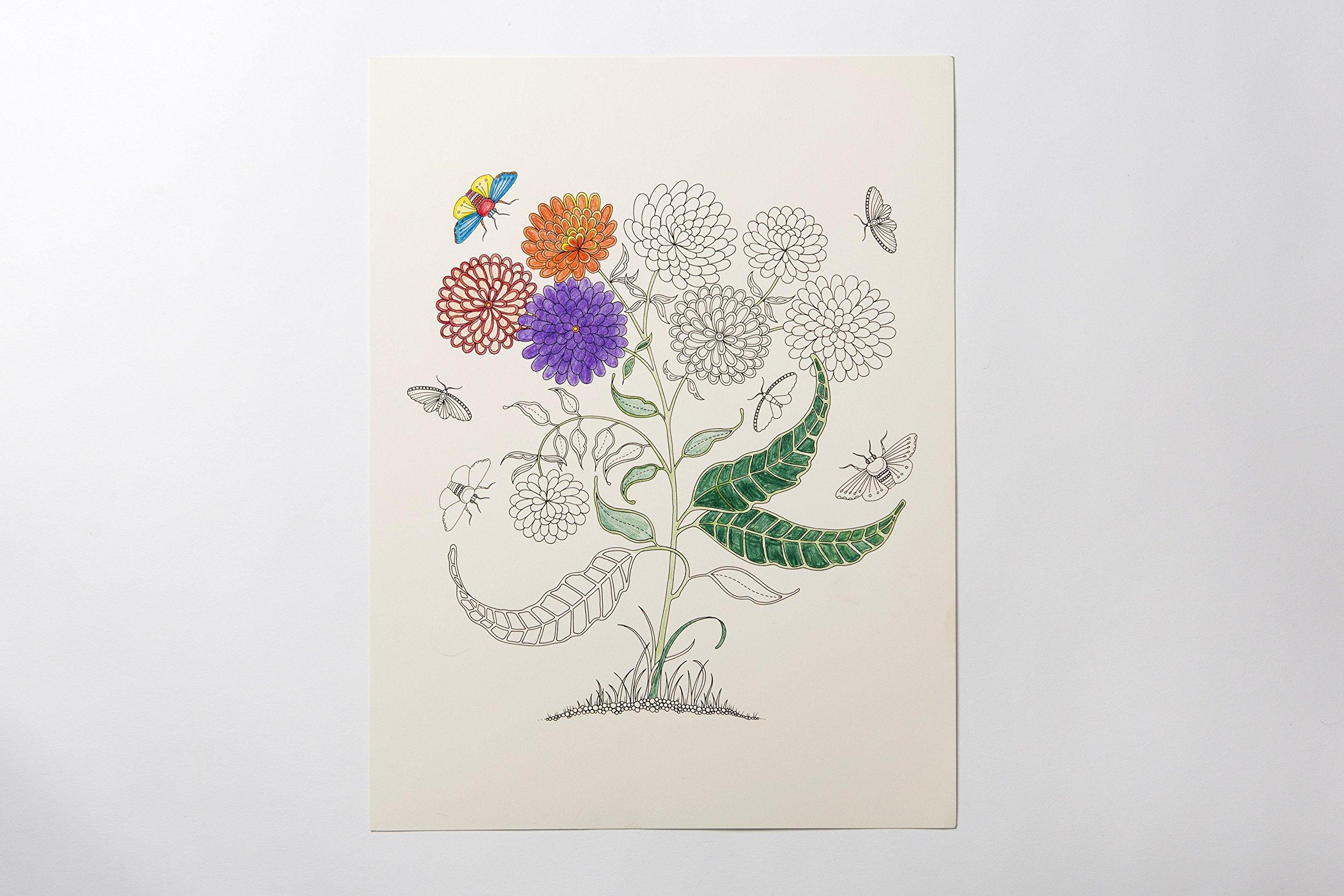 Secret Garden Artist's Edition: A Pull-Out & Frame Colouring Book:  Amazon.co.uk: Johanna Basford: 9781780677309: Books