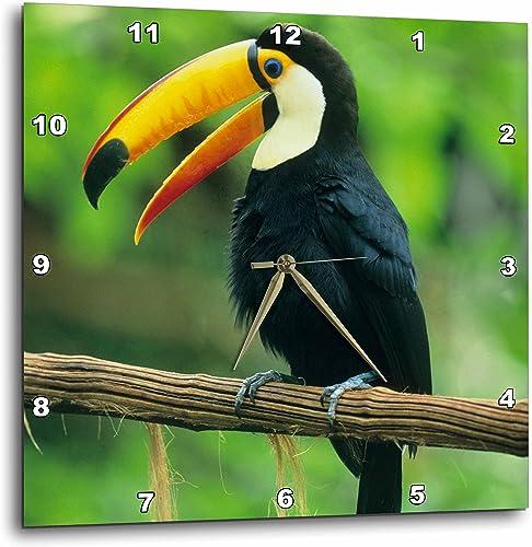 3dRose DPP_85574_3 Toco Toucan, Tropical Bird, Iguacu Falls NP, Brazil – SA02 KSC0005 – Kevin Schafer – Wall Clock, 15 by 15-Inch