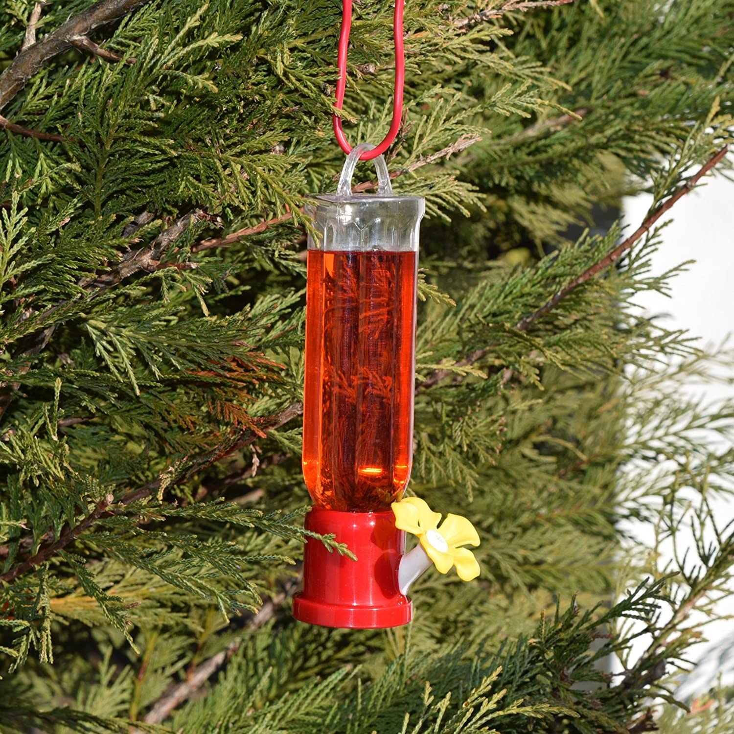 for throated one plants feeder hummingbird perched birds d ruby web weed plantsforbirds male on butterfly gallon