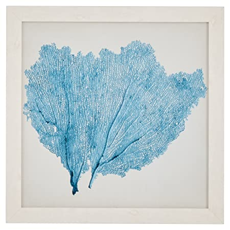 Classic Aqua Sea Fan Coral Coastal Print Wall Art D cor – 23 x 23 Picture Frame, White
