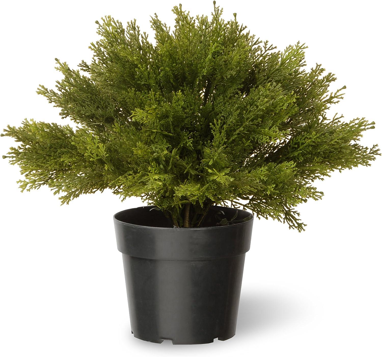 Juniper Bush Plants Decorative Indoor//Outdoor w// Green Pot Golden Yellow 15 in