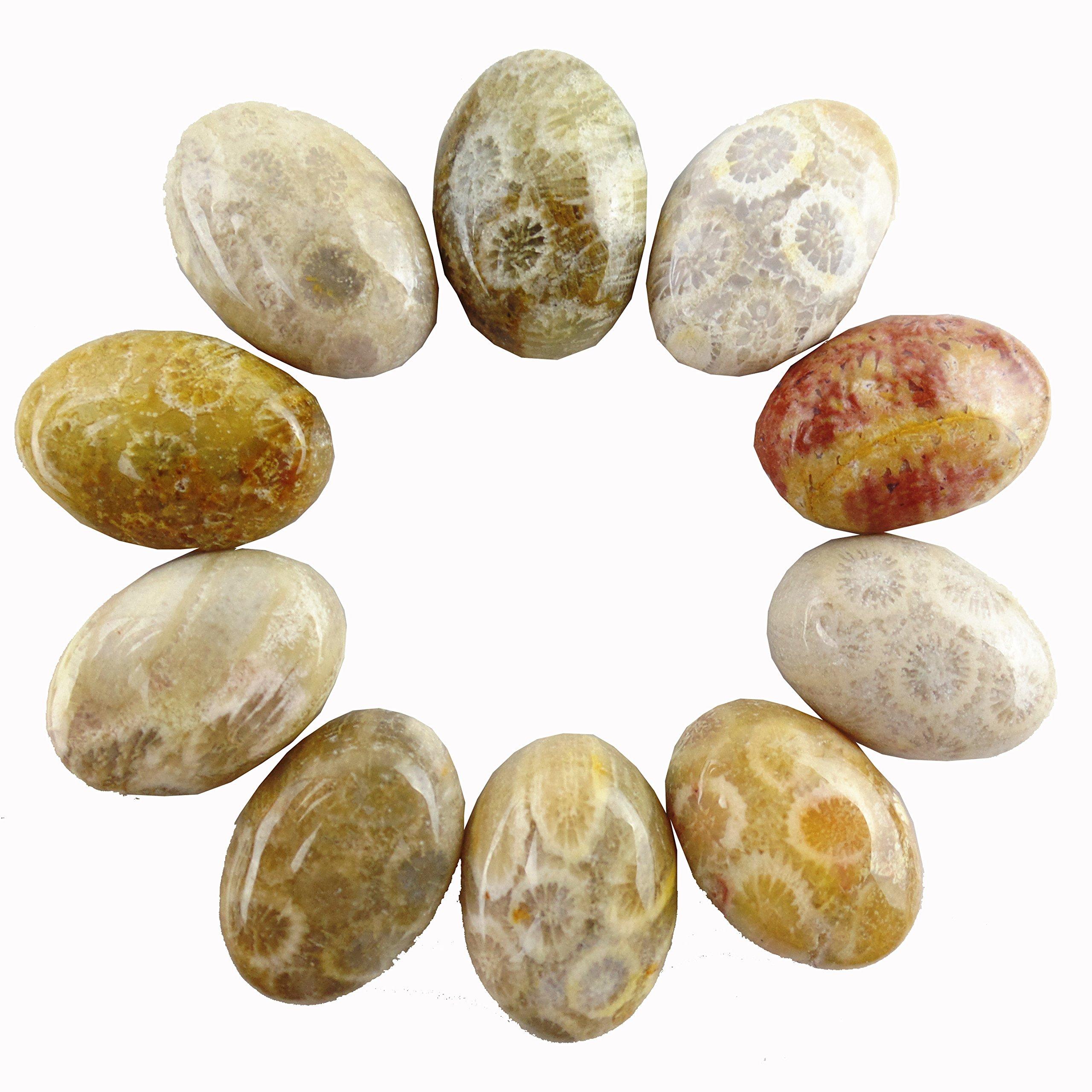 JCGJ Semi Precious Stones,Healing Natural Coral Fossil Oval Cab Cabochon for Jewelry Making(18x13x6mm,10pcs)
