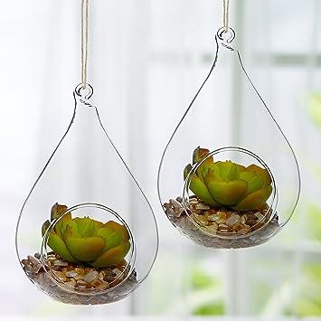 a71e3053b Decorativo diseño de lágrima claro bola de cristal/colgante artificial  plantas suculentas terrario jarrón: Amazon.es: Hogar