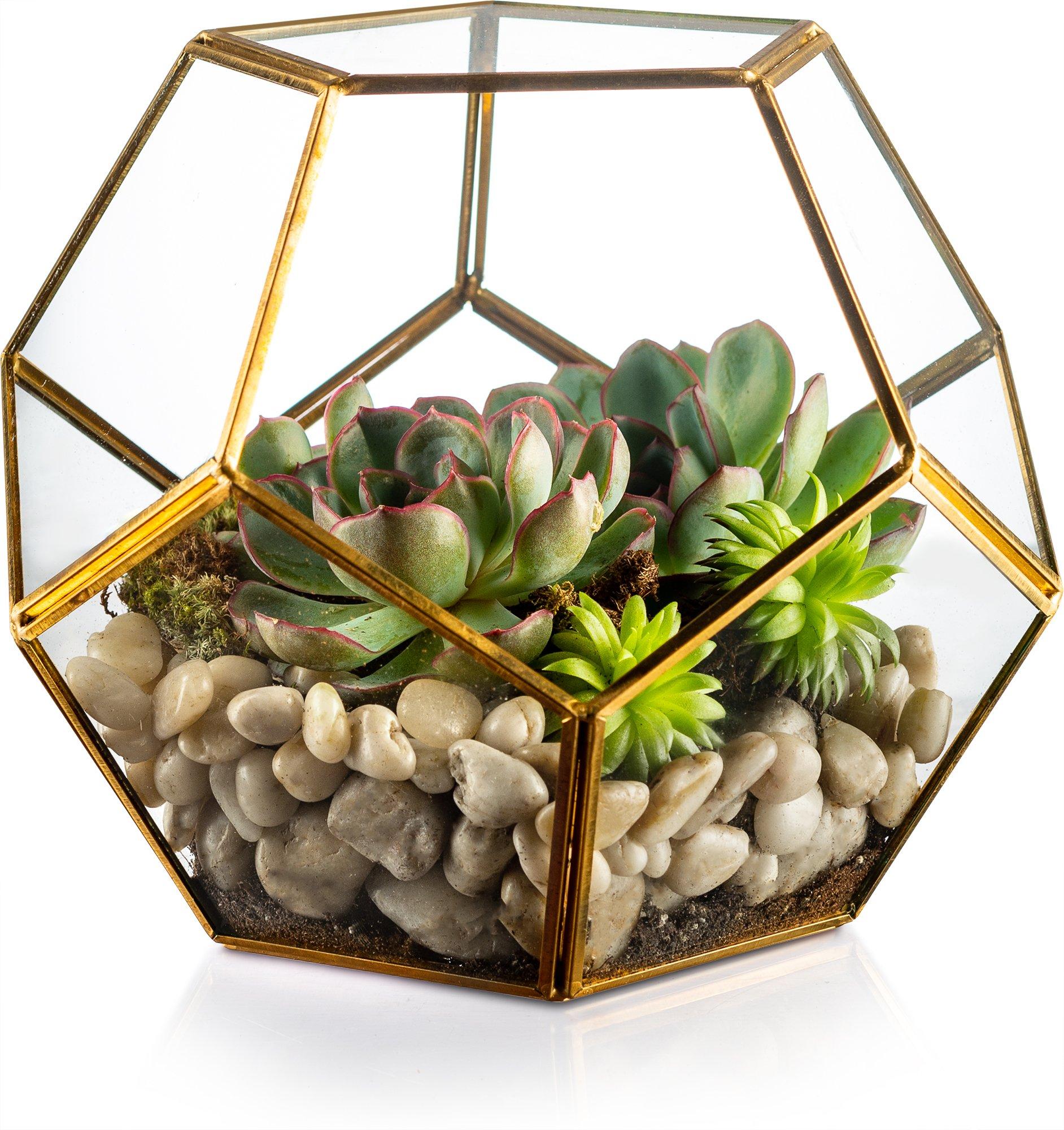 KooK Gold Modern Geometric Terrarium, Succulent, by KooK