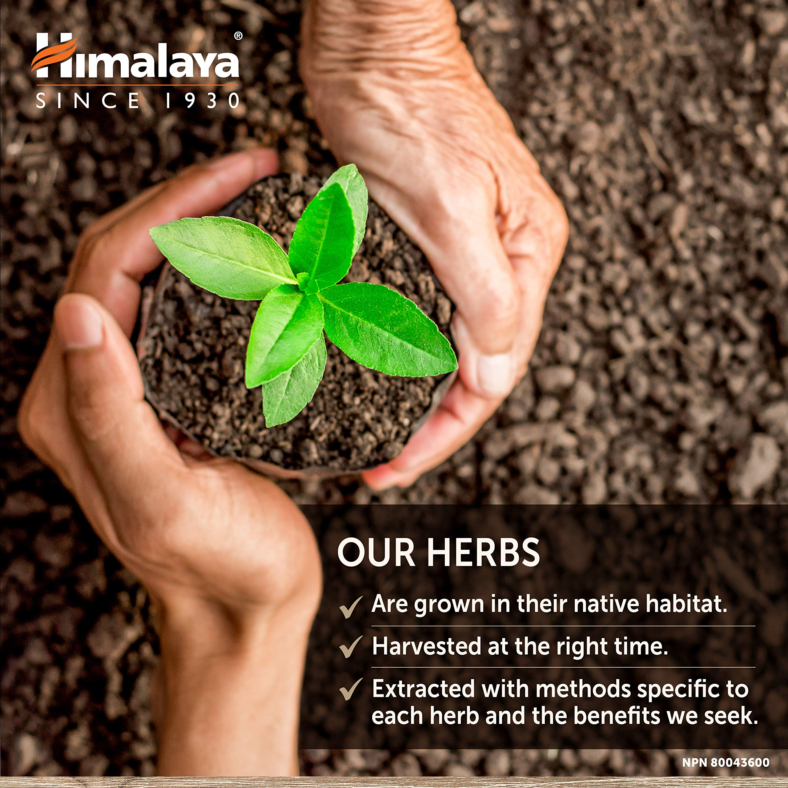 Himalaya Organic Arjuna 60 Caplets for Cholesterol, Blood Pressure & Healthy Heart Function Support 700mg