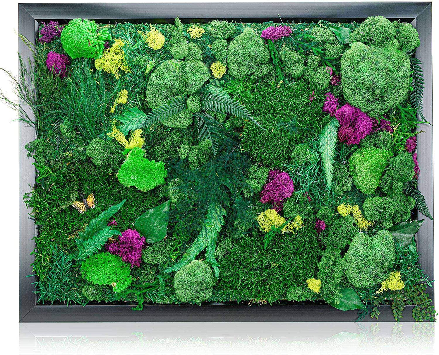 """Natural Plant Wall Art Real Plants and Moss Decorations (12"""" x 16"""") Indoor Moss Backdrop With Exotic French Moss And Ferns-Green Decor To Bring Nature Into Your Home And Work Space-Office Plants"""