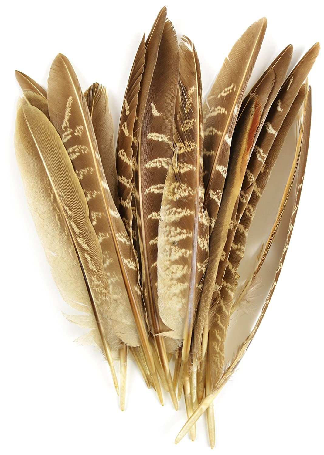 Touch of Nature 38192 Pheasant Wing Quill, 7-Inch Midwest Design Imports Inc.