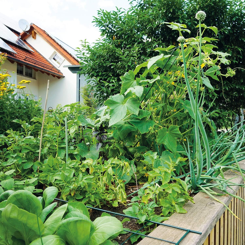 Tutor de espaldera para hortalizas, 77 x 121 cm (altura): Amazon ...