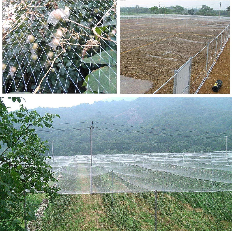 GWHOLE Red de jardín antipájaros para Proteger Plantas y árboles ...