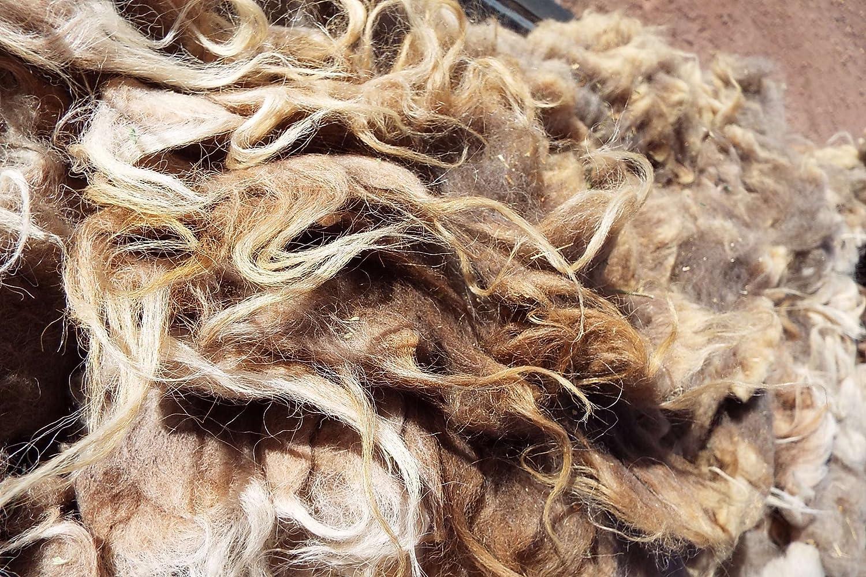 Raw Navajo-Churro Sheep Wool - 6 oz -Shades of Brown Sagebrush Valley Ranch