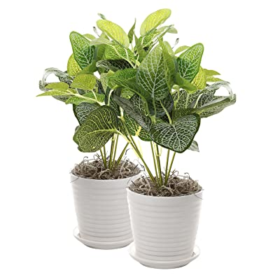 Set of 2 White Ceramic Ribbed Design Round Succulent Plant Pots/Small Decorative Herb Planters: Garden & Outdoor