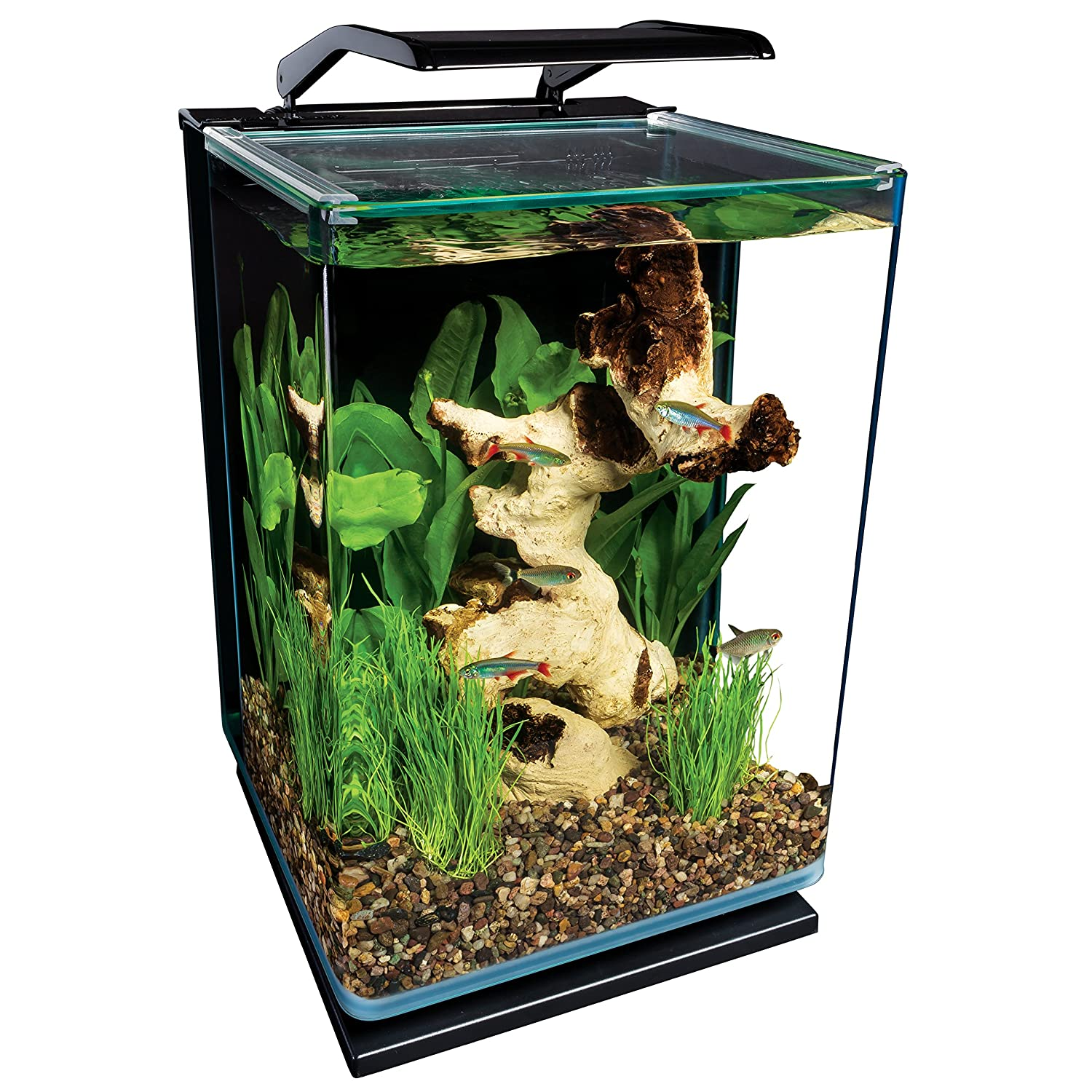 Best 5 gallon betta tank try samurai fighting fish betta for Fish tank top