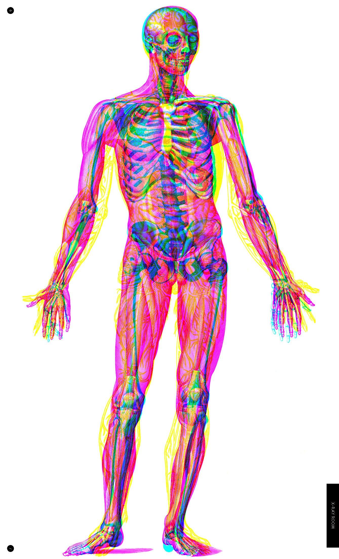Der menschliche Körper: Eine Entdeckungsreise mit der Röntgenlupe ...
