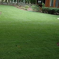 10 LB Outsidepride Blackjack Bermuda Grass Lawn Seed