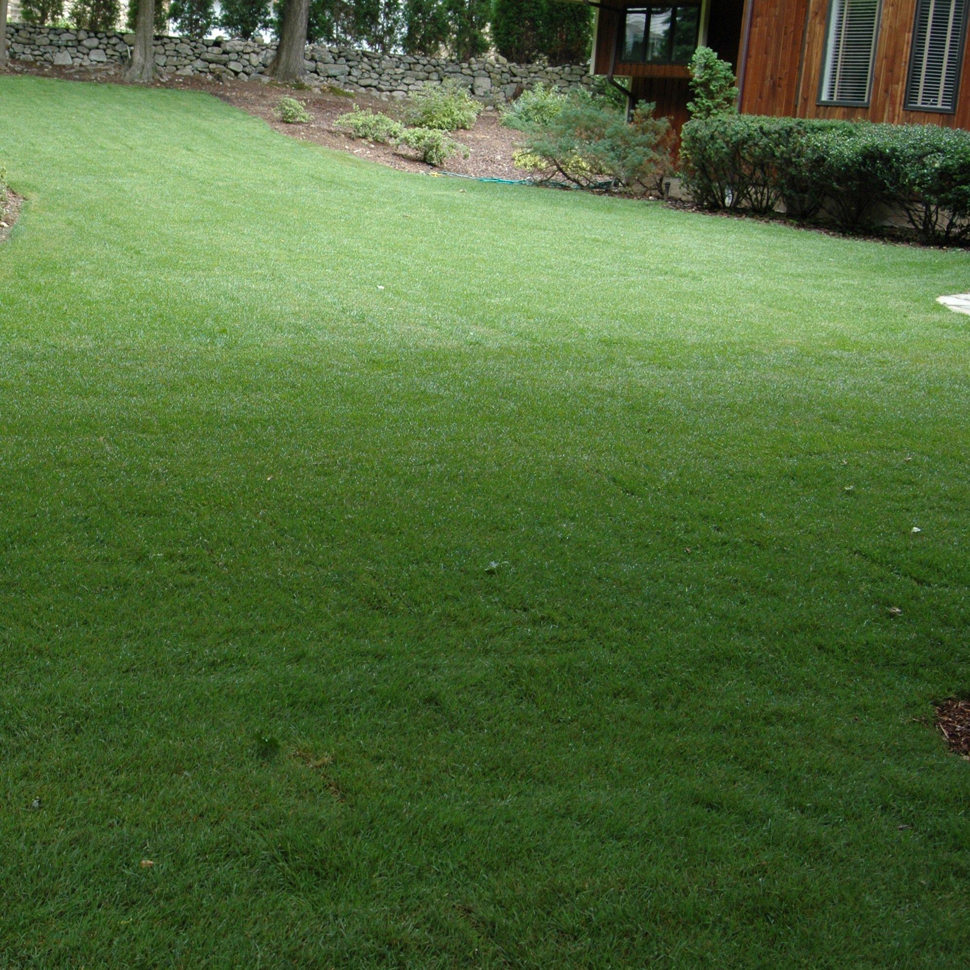 Outsidepride Midnight Kentucky Bluegrass Lawn Grass Seed - 5 LBS