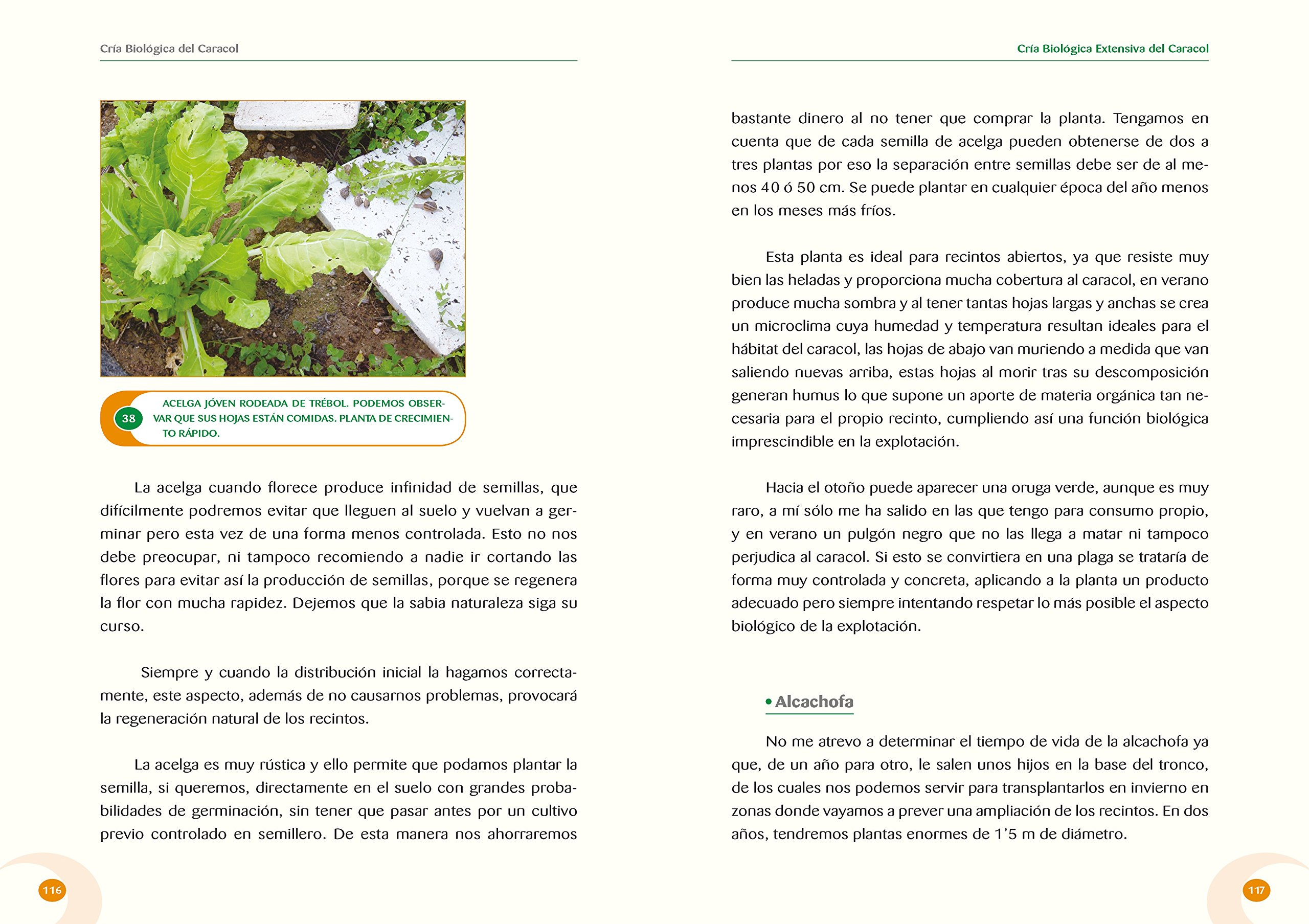 CRIA BIOLOGICA DEL CARACOL / PD.: ISAAC MAYORDOMO EXOJO: 9788487480713: Amazon.com: Books