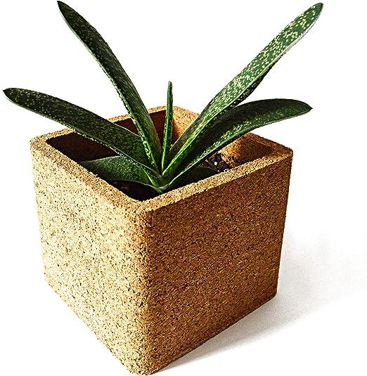 InGrowth Maceta de Corcho ecológica | Decoración botánica del ...