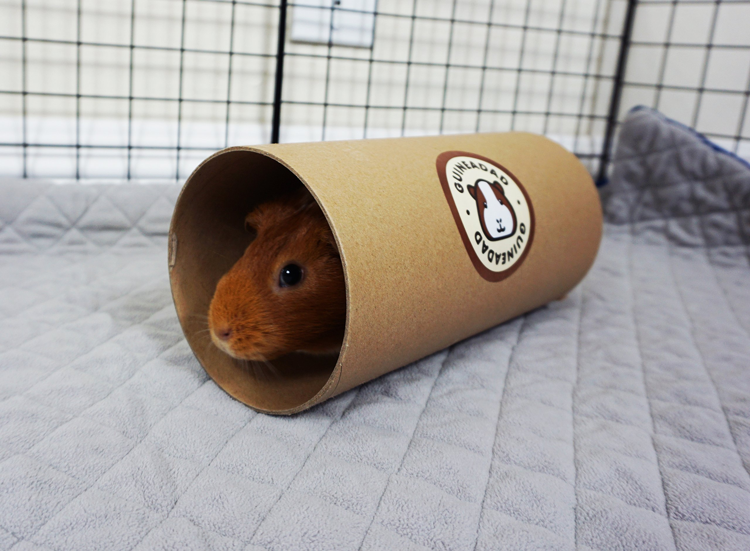 GuineaDad Fleece Liner 2.0 for | Guinea Pig Fleece Cage Liners | Guinea Pig Bedding | Extra Absorbent Antibacterial Bamboo | Waterproof | Available Various Cage Sizes by GuineaDad (Image #4)