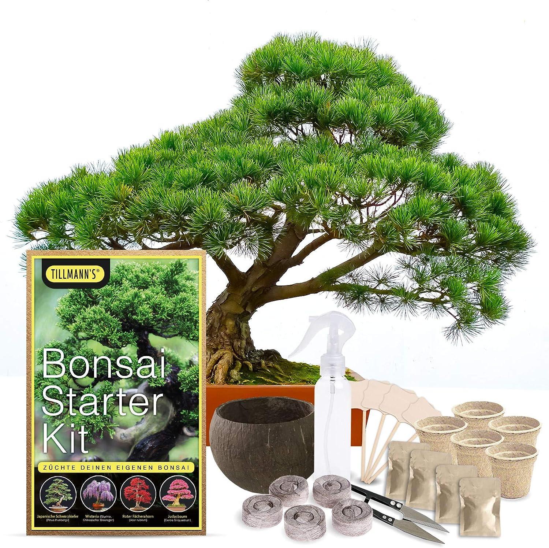 Tillmann's - Kit de iniciación para bonsái