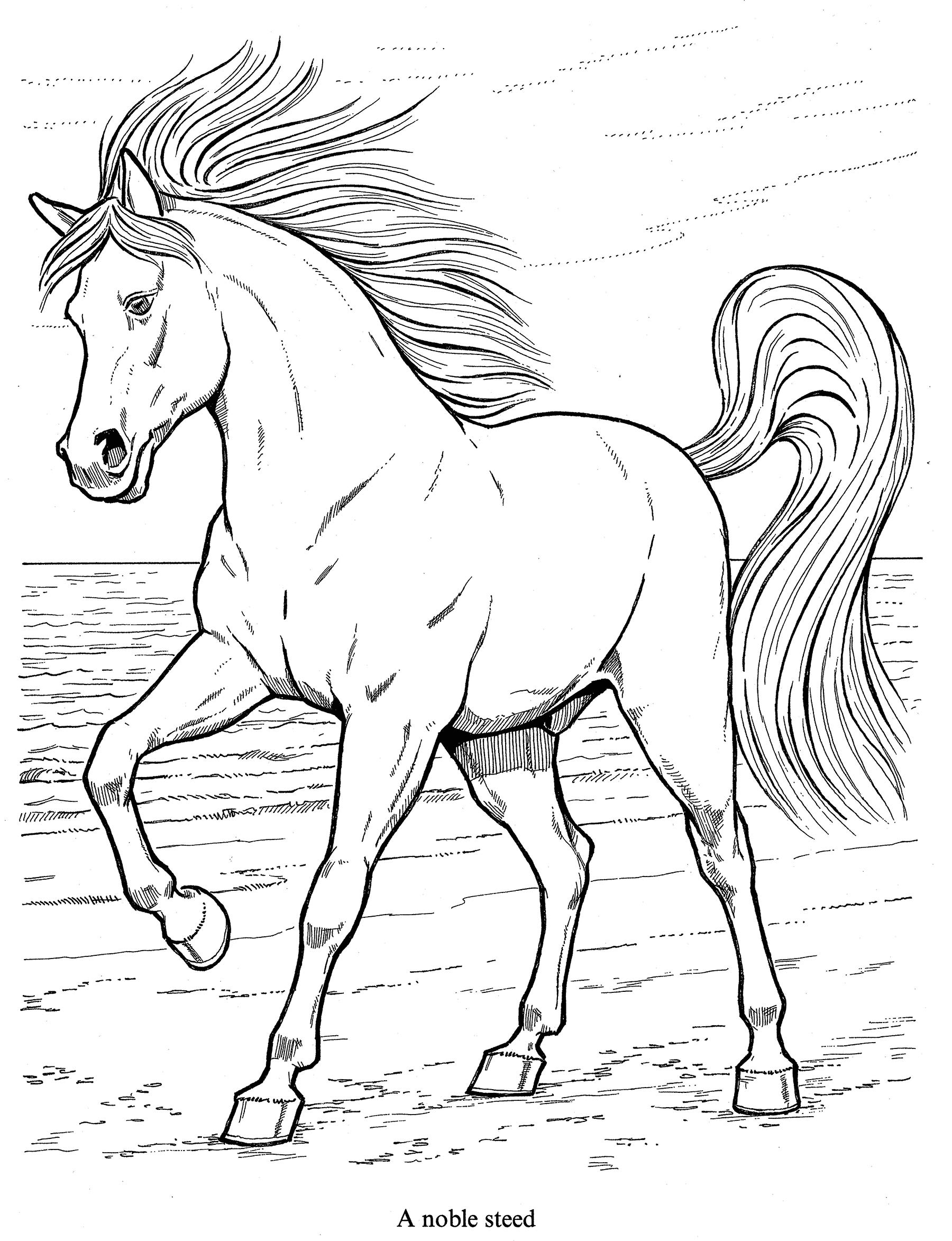 Printable Coloring Pages Horse Show - Coloring Home | 2346x1800