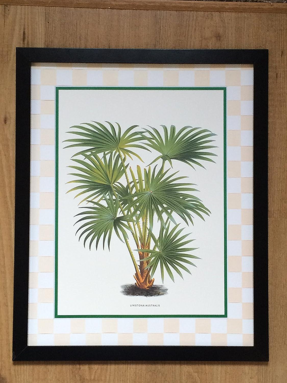 Gerahmte Botanischer Druck Livistona Australis - 40 x 50 cm: Amazon ...