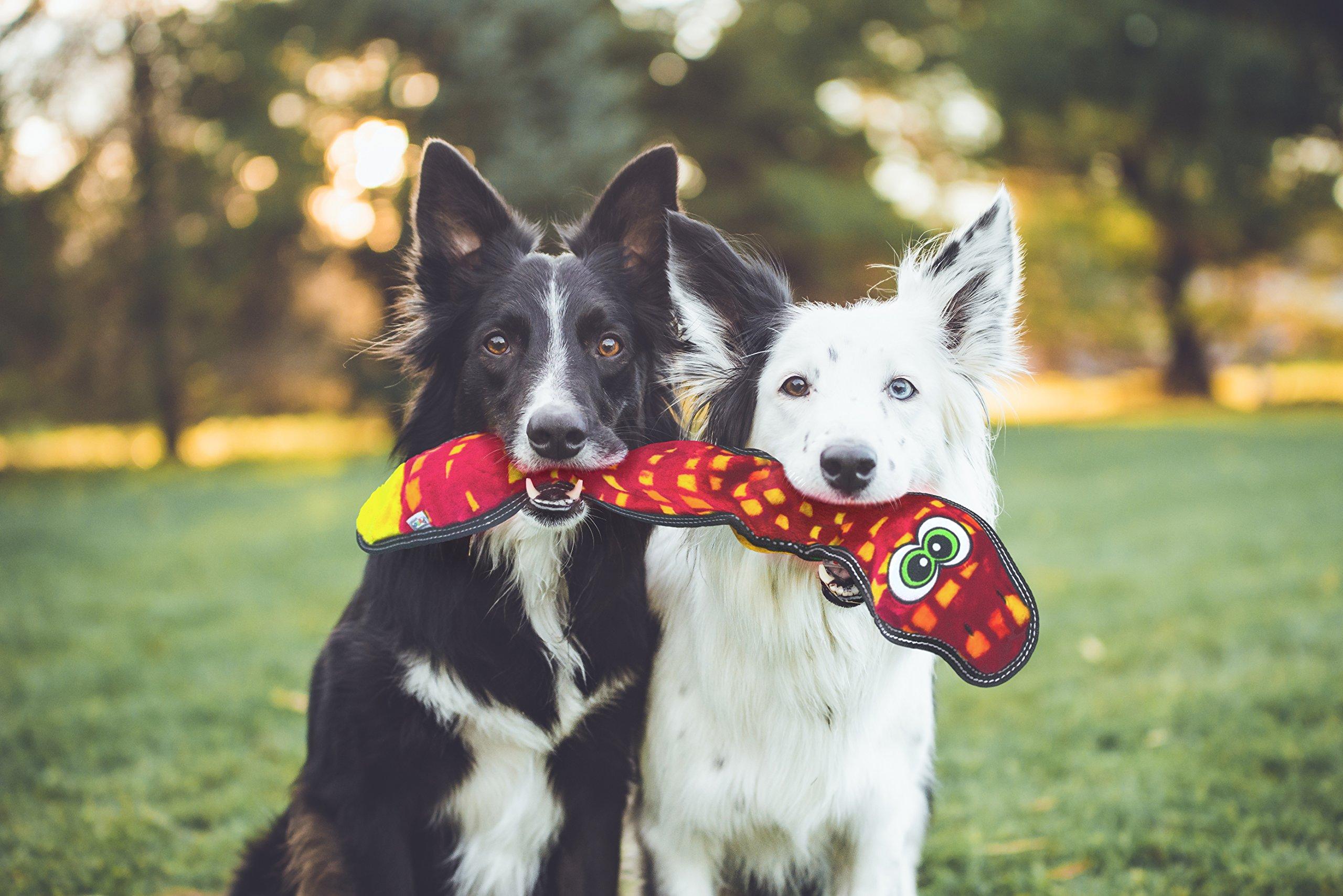 Outward Hound Invincibles Tough Seamz Stuffingless Durable Tough Plush Toy for Dogs, Tough Squeaky Dog Toy by, Snake, 3 Squeakers by Outward Hound (Image #4)