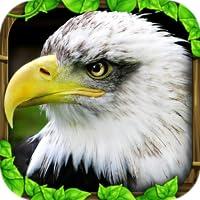 Eagle Simulator